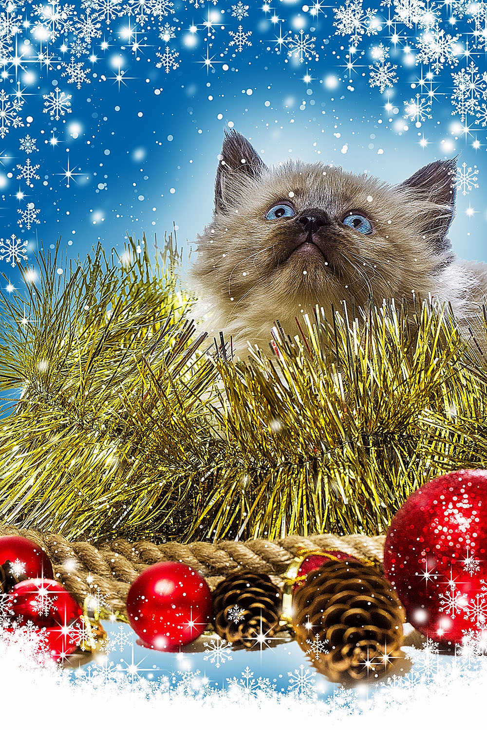 Christmas card. Cute red kitten in the snow. Kitten on Christmas background