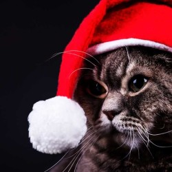 Christmas Johnny Cat)
